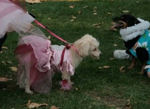 Pet fashion parade