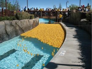 Ducky Race 2010.