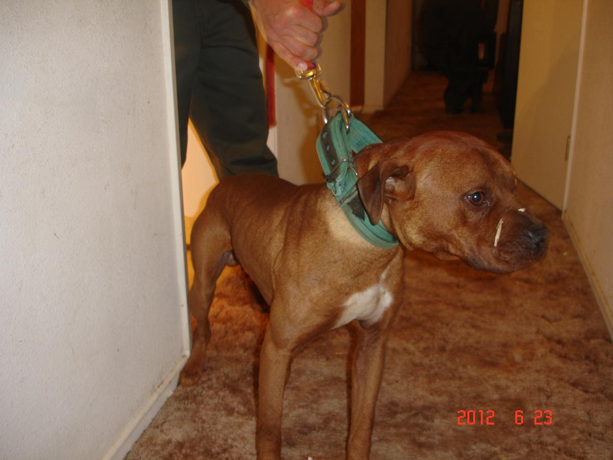 UPDATED: Authorities bust dog fighting ring, arrest 12