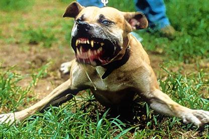 What Dog Breed Is Toughest And Most Protective